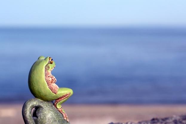 井の中の蛙